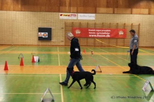 3. Zoe Gallery – Rally dec. 2013 – Fotograf Minddog ved Iben M. K. Pedersen