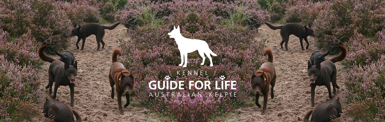 Kennel Guide For Life